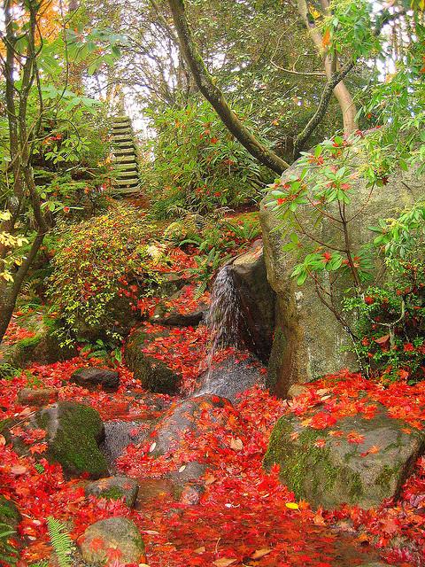 The japanese garden at Washington Park Arboretum in Seattle / USA