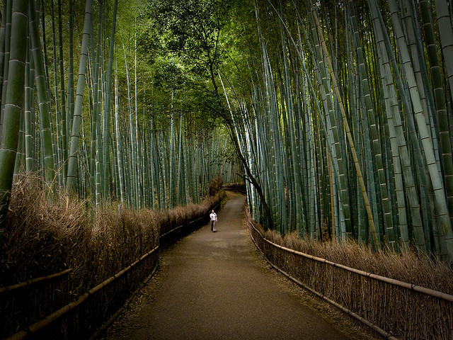 by Marser on Flickr.The path of bamboo, near Tenryuuji temple, Kyoto, Japan.