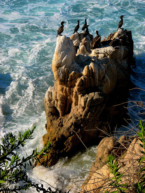 Cormorants on a sea rock, Baja California Sur, Mexico