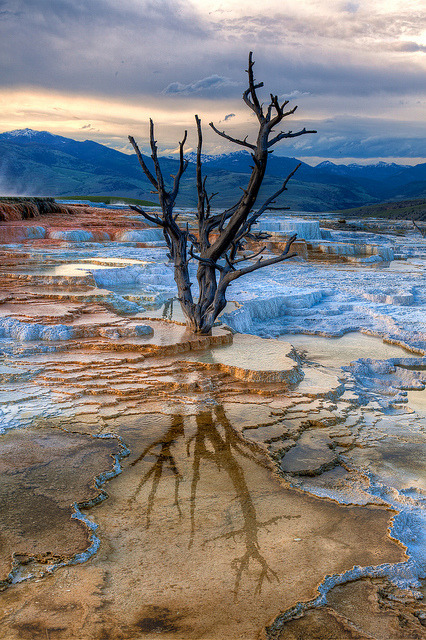 The upper terraces of Mammoth Hot Springs in Yellowstone National Park / USA